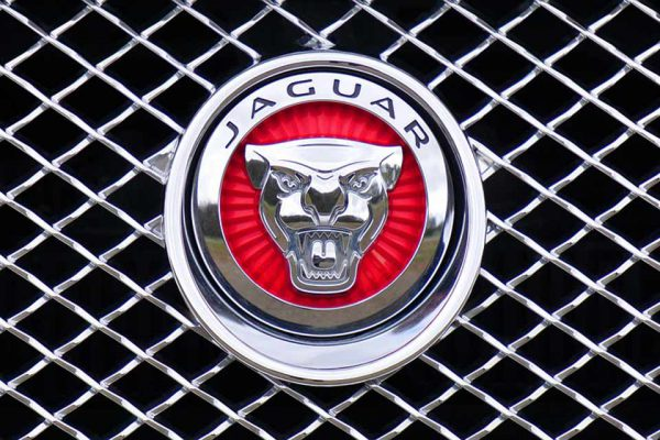 jaguar-1660955_960_720